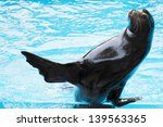 Sea Lion Playing In Blue Water