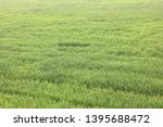 natural green background with... | Shutterstock . vector #1395688472