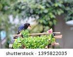 taiwan blue magpie  urocissa...   Shutterstock . vector #1395822035