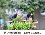 taiwan blue magpie  urocissa...   Shutterstock . vector #1395822062