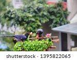 taiwan blue magpie  urocissa...   Shutterstock . vector #1395822065