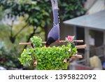 taiwan blue magpie  urocissa...   Shutterstock . vector #1395822092