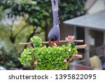 taiwan blue magpie  urocissa...   Shutterstock . vector #1395822095