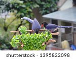 taiwan blue magpie  urocissa...   Shutterstock . vector #1395822098