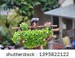 taiwan blue magpie  urocissa...   Shutterstock . vector #1395822122