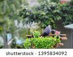 taiwan blue magpie  urocissa...   Shutterstock . vector #1395834092