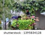 taiwan blue magpie  urocissa...   Shutterstock . vector #1395834128