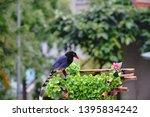 taiwan blue magpie  urocissa...   Shutterstock . vector #1395834242