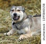 light gray dog half breed on a... | Shutterstock . vector #1395840158