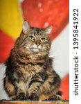 beautiful fluffy brown cat... | Shutterstock . vector #1395841922