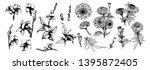 botanical hand drawn sketch.... | Shutterstock .eps vector #1395872405