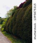 A Large Box Tree Hedge Sculpte...
