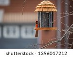 Bird Feeder In Spring  With...