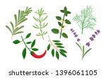 set of culinary herbs and... | Shutterstock .eps vector #1396061105