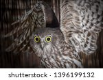 Barking Owl, Owl, Talons, Nocturnal, Birds, Bird, Feathers, Feather, Predator, Predators, Flight, Wings, Eyes, Closeups,