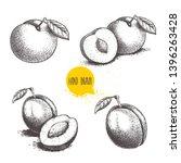different plums sketch set....   Shutterstock .eps vector #1396263428