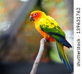 Beautiful Colorful Parrot  Sun...
