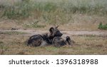 two rare african wild dogs ... | Shutterstock . vector #1396318988
