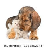 Stock photo playful dachshund puppy embracing gray kitten isolated on white background 1396562345