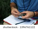 tree swallow aka tachycineta...   Shutterstock . vector #1396761122