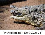 african nile crocodile wildlife ... | Shutterstock . vector #1397023685