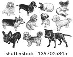 Dogs Set. Cute Puppies Of...