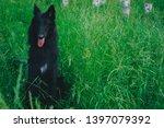 summer portrait of black...   Shutterstock . vector #1397079392