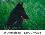 summer portrait of black...   Shutterstock . vector #1397079395