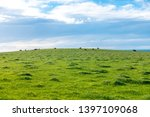 Distance View Of Herd Of Cattl...