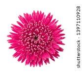 gerbera daisy flower  gerbera... | Shutterstock . vector #1397110928