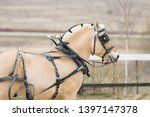 Horse In Carriage Harness With...