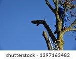 hauts de france france november ... | Shutterstock . vector #1397163482