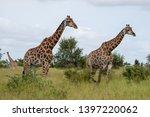 giraffes in the bush ... | Shutterstock . vector #1397220062