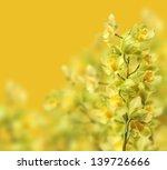 green orchid flower | Shutterstock . vector #139726666