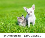 Stock photo portrait of a chihuahua puppy and a kitten on green grass empty space for text 1397286512