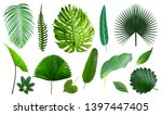 tropical green leaves... | Shutterstock . vector #1397447405