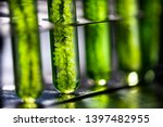 Photobioreactor In Laboratory ...