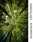 Small photo of Looking up Green forest. Trees with green Leaves, blue sky and sun light. Bottom view background