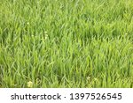 natural green background with... | Shutterstock . vector #1397526545
