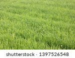 natural green background with... | Shutterstock . vector #1397526548