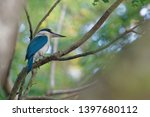 the collared kingfisher ... | Shutterstock . vector #1397680112