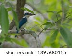 the collared kingfisher ... | Shutterstock . vector #1397680115