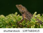 the oriental garden lizard ... | Shutterstock . vector #1397683415