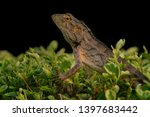 the oriental garden lizard ... | Shutterstock . vector #1397683442
