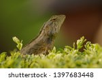 the oriental garden lizard ... | Shutterstock . vector #1397683448