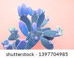 cactus fashion set. art gallery ... | Shutterstock . vector #1397704985