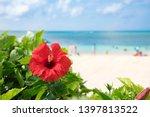 Hibiscus of Okinawa where the beach blooms