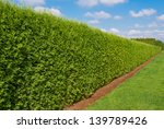 long green hedge with a lawn... | Shutterstock . vector #139789426