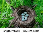 Six Eggs In The Blackbird's Nest