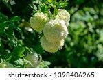 beautiful white balls of... | Shutterstock . vector #1398406265